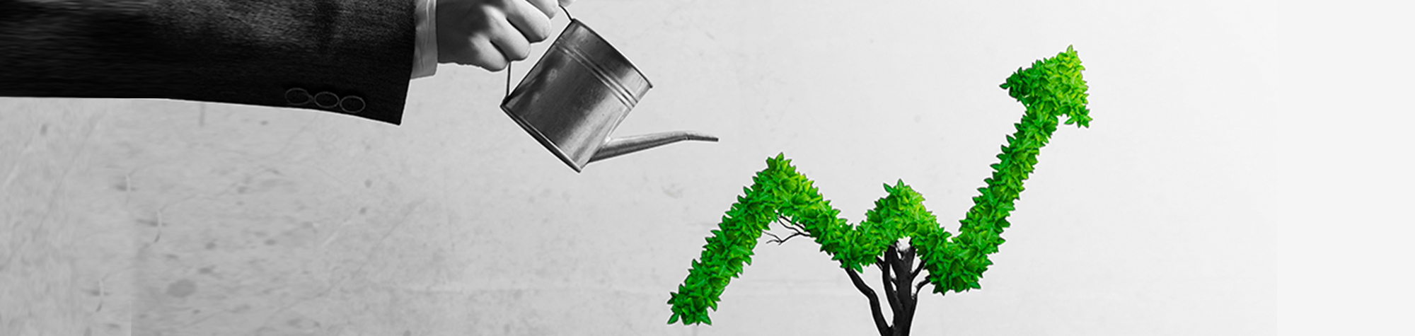 Eco marketing , green marketing What it is and how to apply it